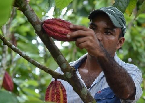 Colombie les 4 matières premières