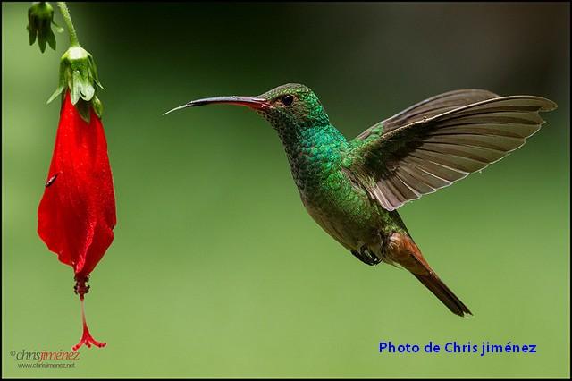 Les 5 meilleurs sites d'observation d'oiseaux en Colombie.
