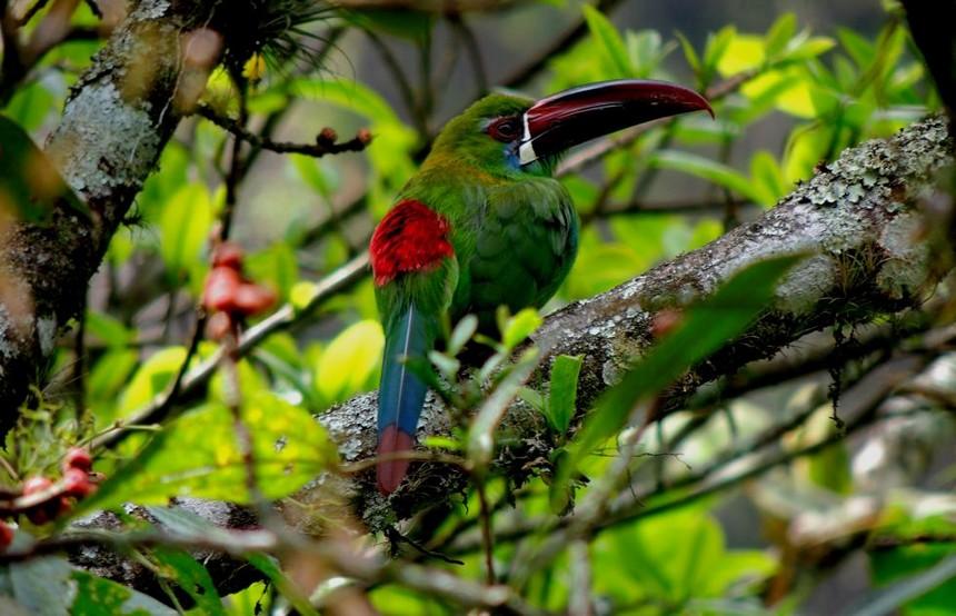 Parc National de Otún Quimbaya